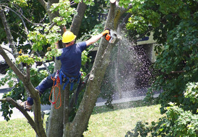 Gardening Services in Auckland