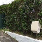 Mt Roskill hedge removal...