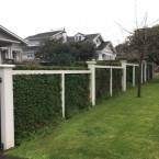 Mt Albert hedge removal...